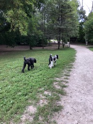 Roxy & Ringo at the Doggy Park