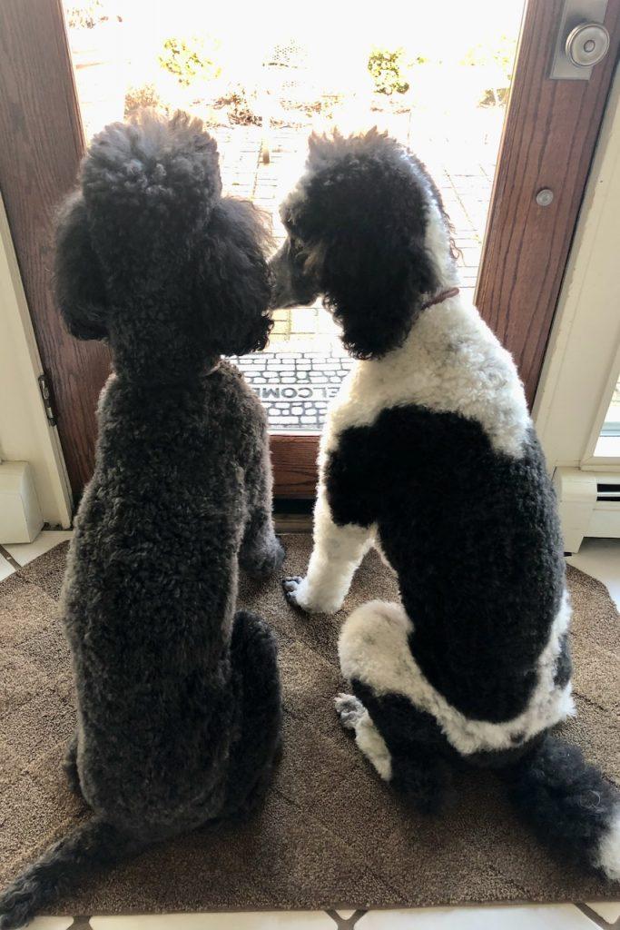 Roxy & Ringo 1