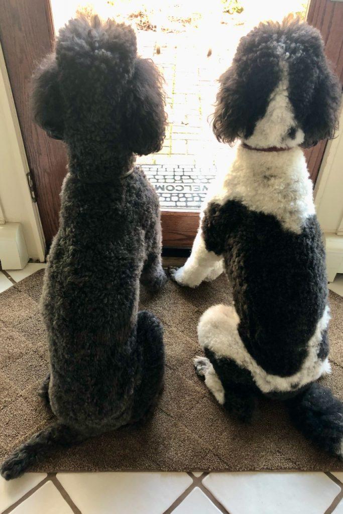 Roxy & Ringo 3